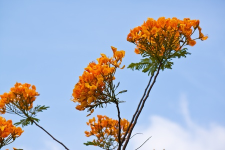 orange flower with blue sky photo