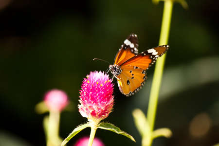 butterfly with flower photo