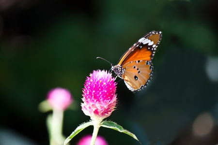 lovely butterfly with flower photo