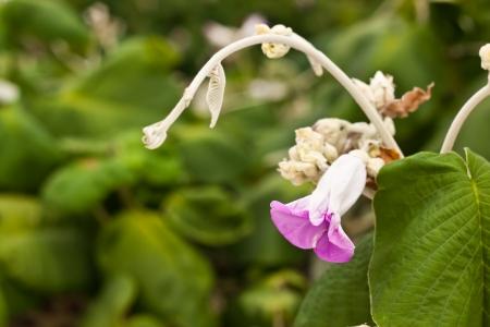 beauty of flower photo