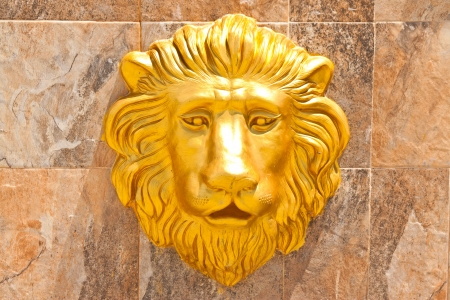 head of lion photo