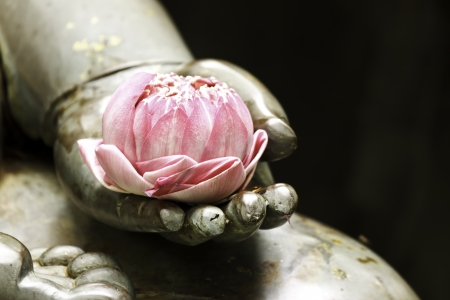 lotus in hand photo