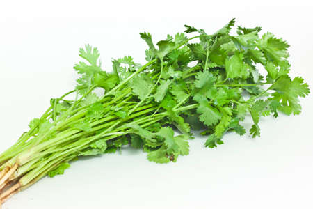 parsley on white paper photo