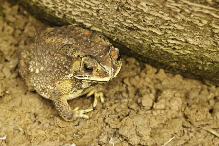 the toad photo