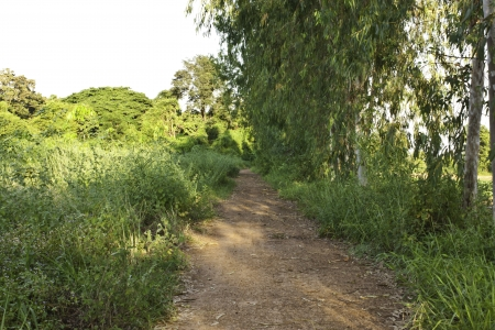 fluting: Road to the ranch in the country