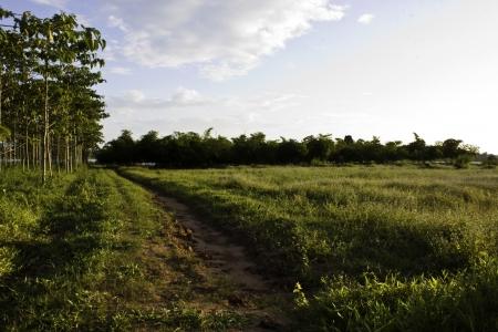 fluting: The farm