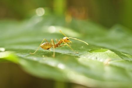 little ants photo