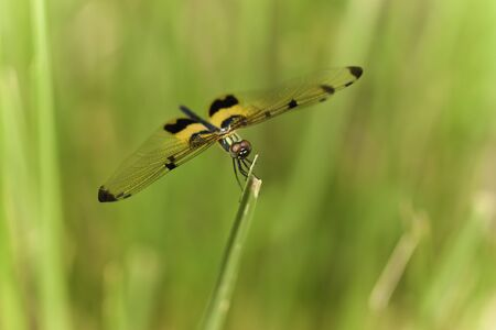 dragonfly in forest photo