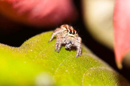 macro spider photo