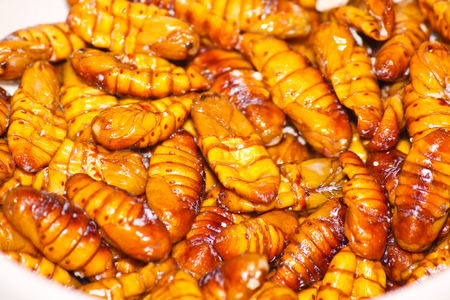 fried silkworms photo