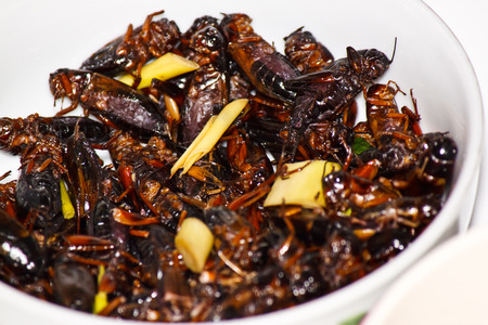 fried crickets photo
