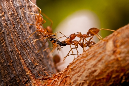 arachnid: the ants Stock Photo