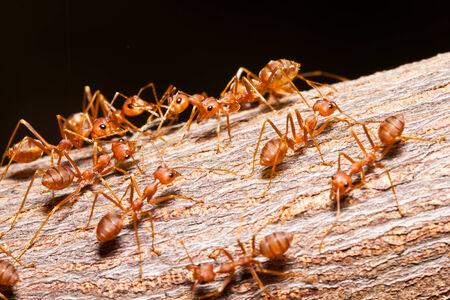 the ants photo
