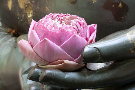 the pink lotus in hand of buddha photo