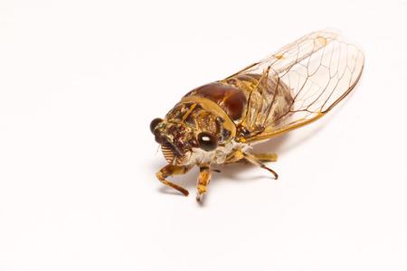 the cicada photo