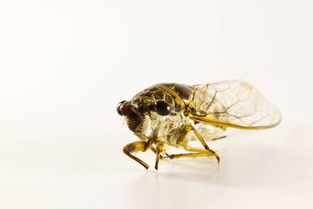 the cicada on paper background photo