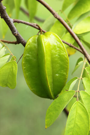 star fruit photo