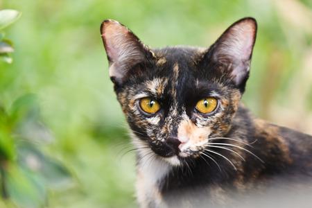 lovely: lovely cat