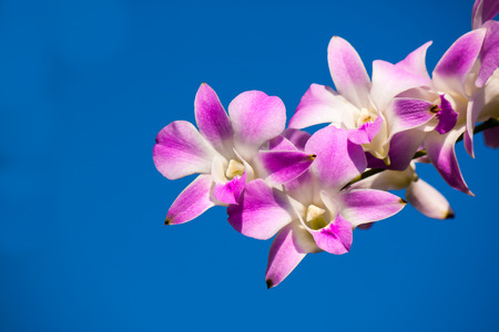 beauty of orchid photo