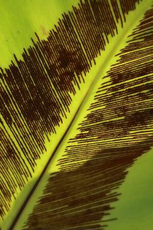 palm leaf background photo