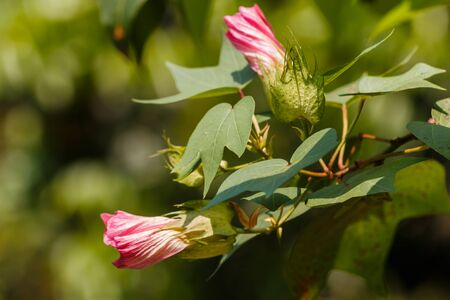 beautiful flower in garden photo