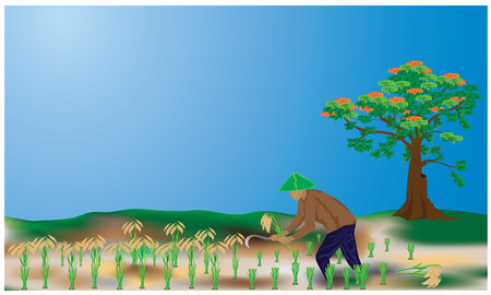 paddy field: lifestyle countryside vector design Illustration