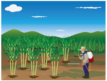 sugarcane: lifestyle countryside vector design Illustration