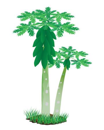 progettazione papaia pianta vettoriale
