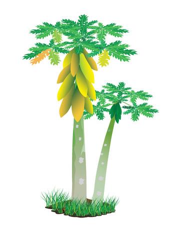 papaya plant vector design Vettoriali