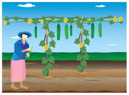 cucumber: agriculturist harvest cucumber vector design
