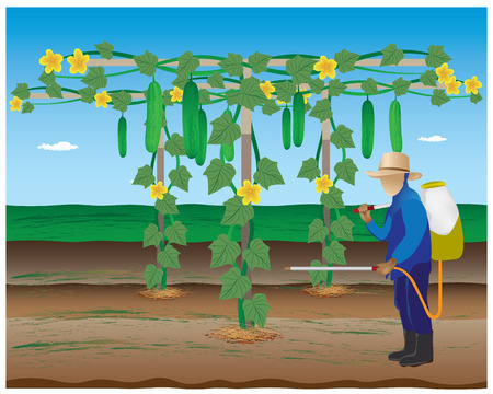 insecticide: agriculturist spray insecticide cucumber plant vector design