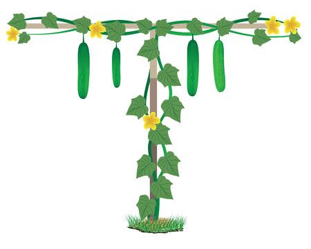 cucumber plant vector design