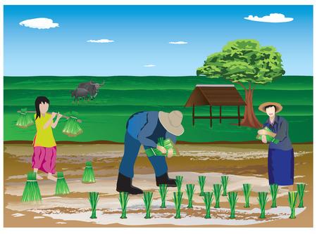 plantando arbol: trasplante de plántulas de arroz agricultor en el diseño vectorial granja