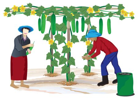 agriculturist: agriculturist in cucumber farm vector design Illustration