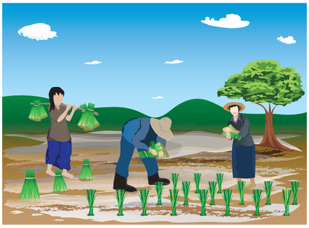 irrigation: farmer transplant rice seedlings in farm vector design