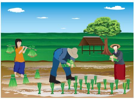 field work: farmer transplant rice seedlings in farm vector design