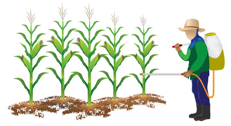 insecticide: agriculturist insecticide corn plant vector design