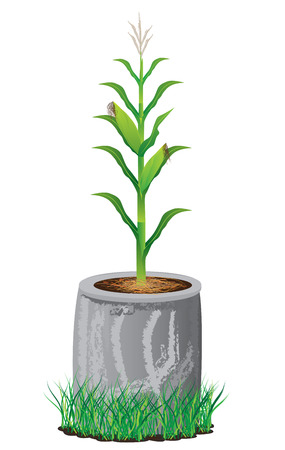 시멘트: corn plant in cement pipe vector desing