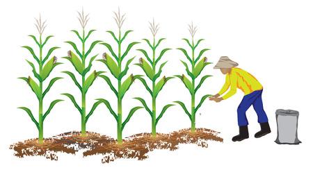 the ears of corn: agriculturist manure corn plant vector design Illustration