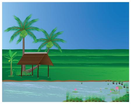 arrozal: el arroz en el campo Vectores