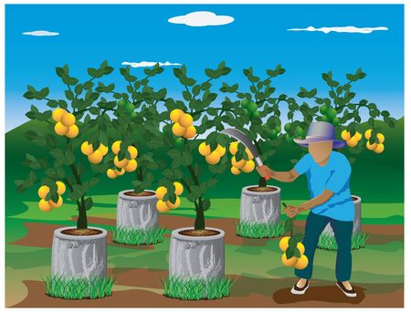 graft: agriculturist harvest lemon vector design