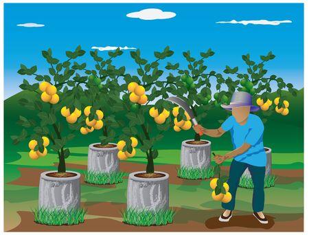enten: landbouwer oogst citroen vector design Stock Illustratie