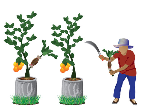agriculturist: agriculturist with lemon plant vector design Illustration