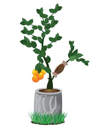 graft: lemon plant vector design