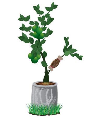 enten: citroen plant vector ontwerp