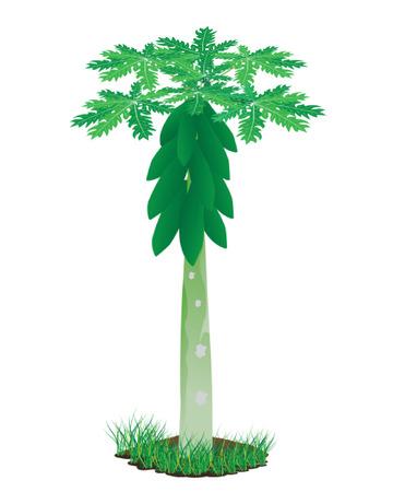 citrus tree: dise�o de la papaya planta vector