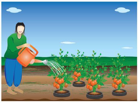 tomato plant: agriculturist water tomato plant vector design