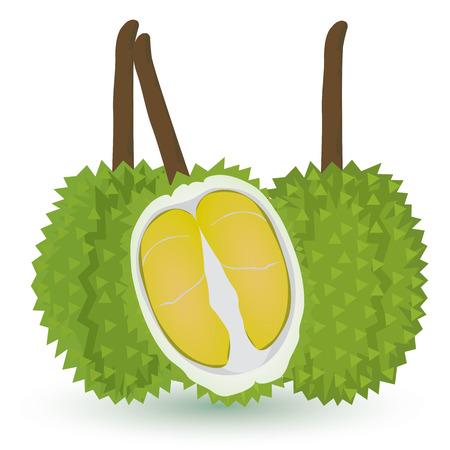 distinguish: durian fruit vector design