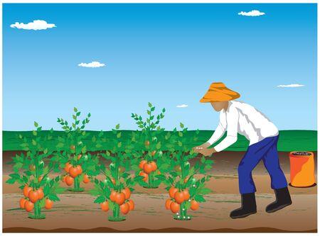 manure: agriculturist manure tomato plant vector design