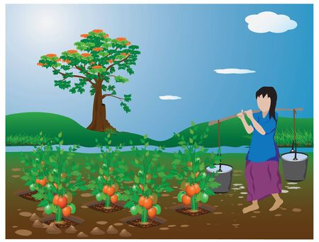 agriculturist: agriculturist in tomato garden vector design Illustration